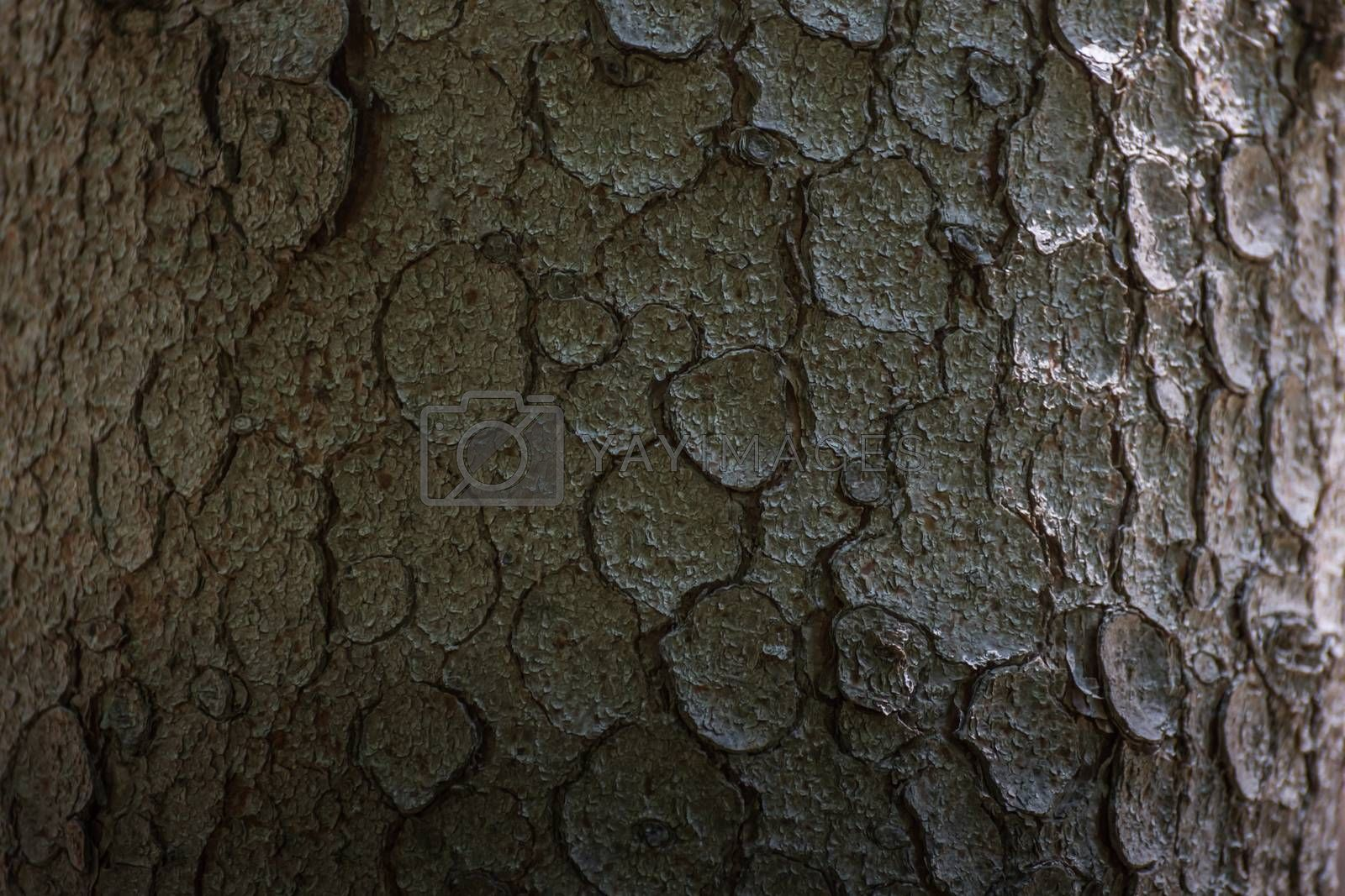 Tree bark structure in the forest detailed view