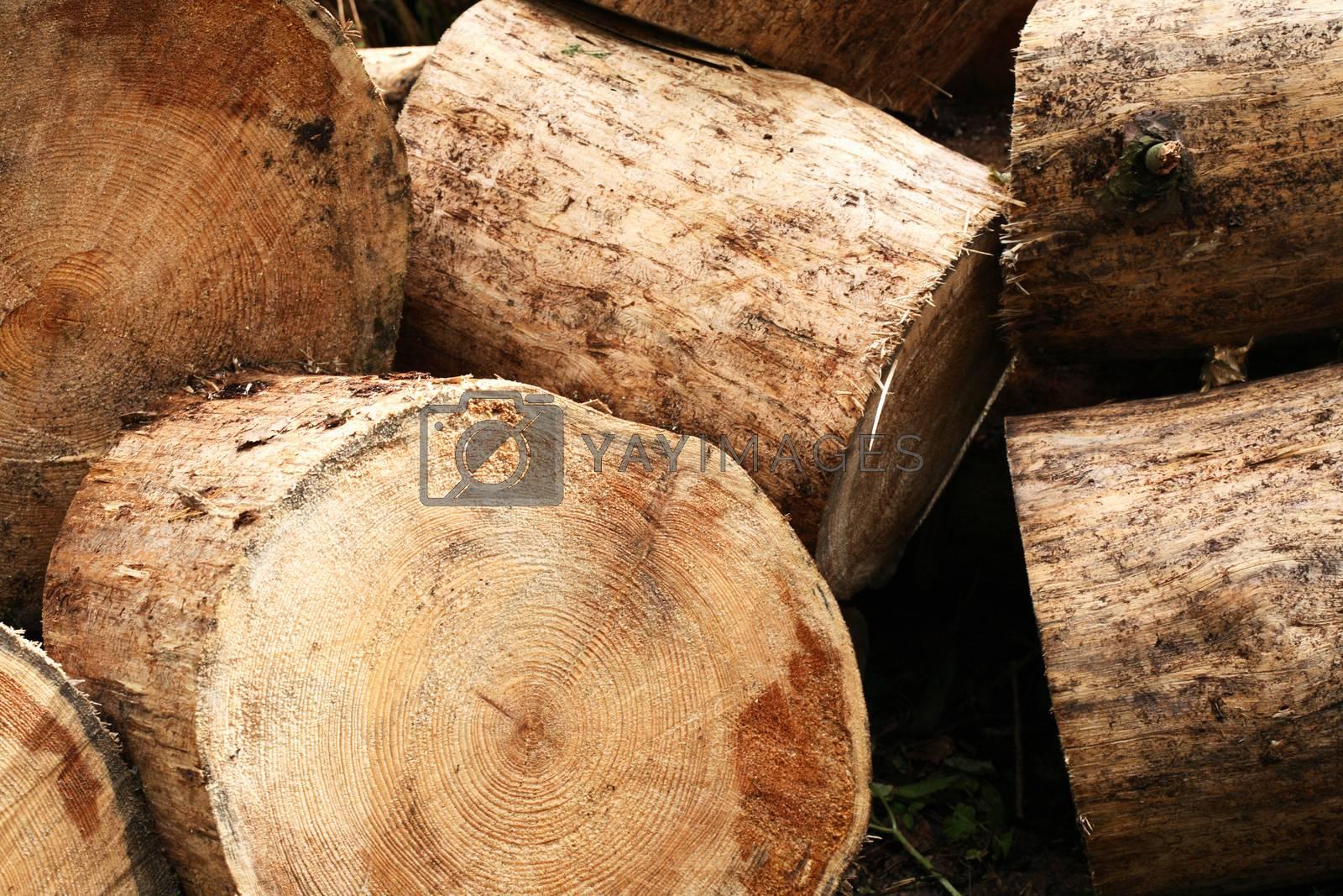 Royalty free image of Freshly Sawn Wood by kvkirillov