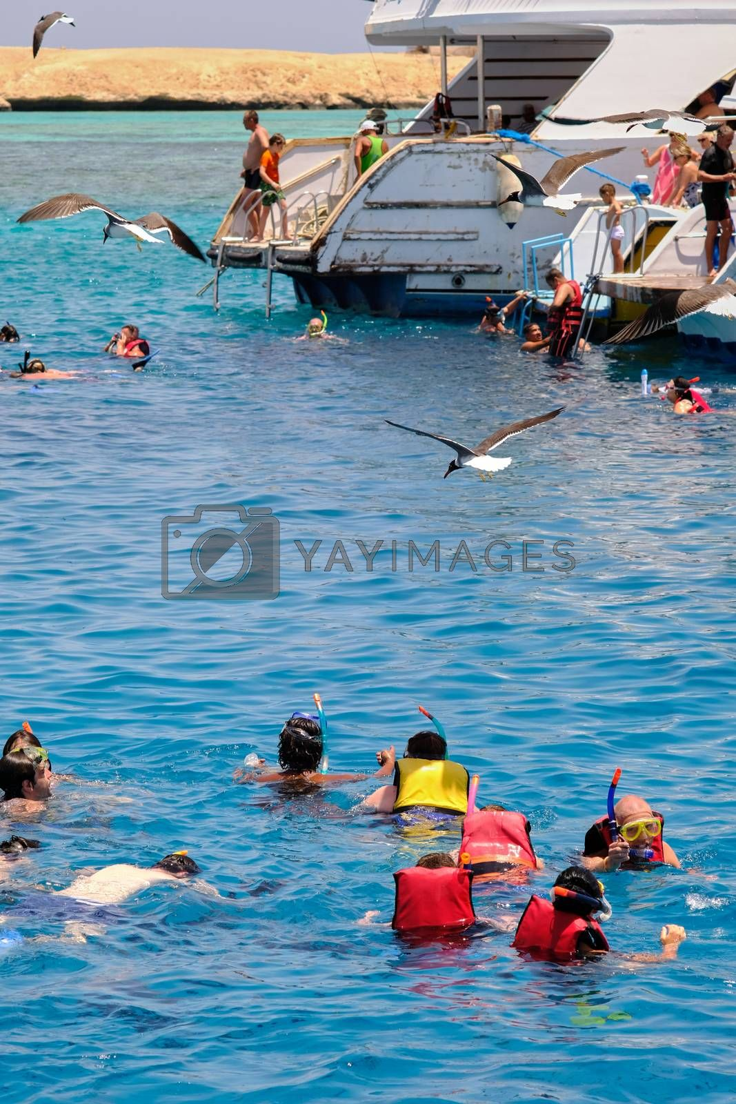 Hurghada / Egypt - May 21, 2019: Group of tourists snorkeling and scuba diving near Giftun island in Red Sea, Hurghada, Egypt