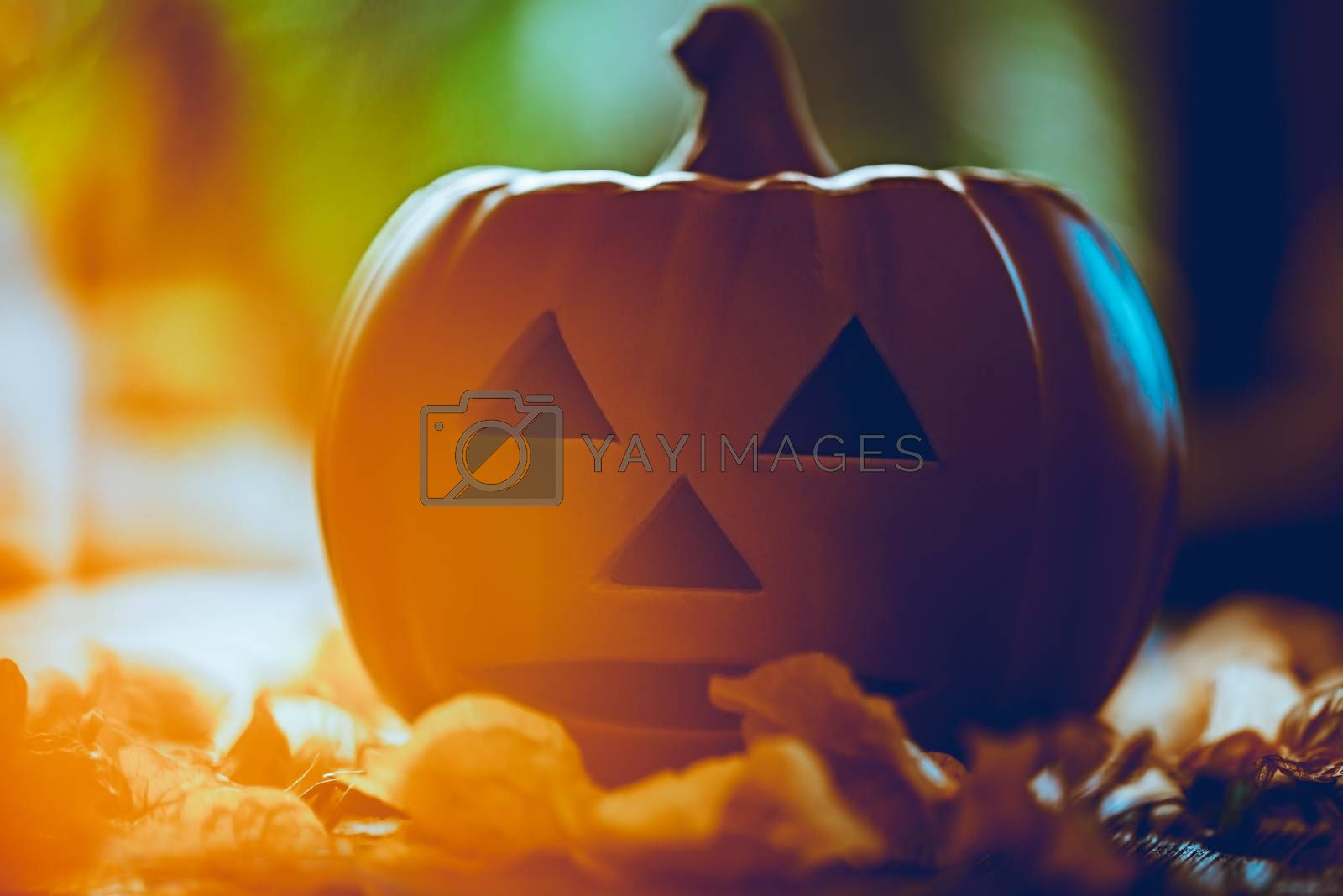Closeup Photo of a Pumpkin with Traditionally Carved Face. Autumnal Garden in Sunny Day. Jack o Lantern for Halloween Party. American Holiday.