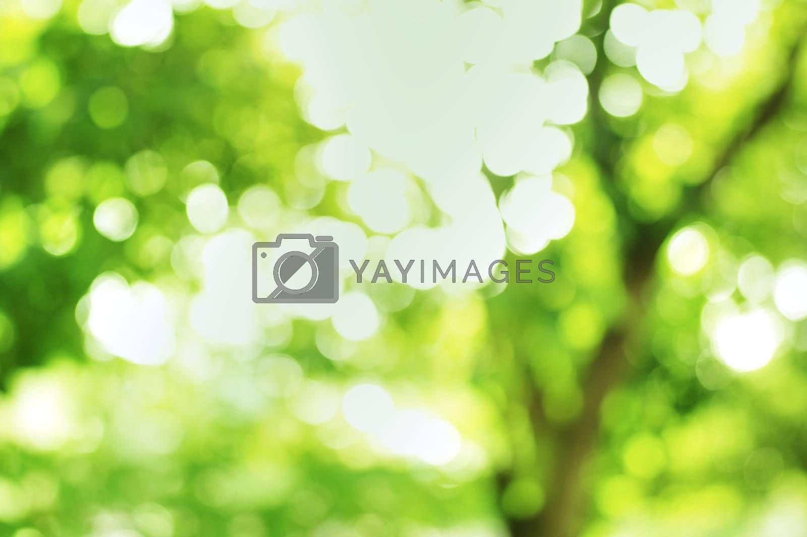 Green background bokeh sparkle of sunshine from natural forest park.