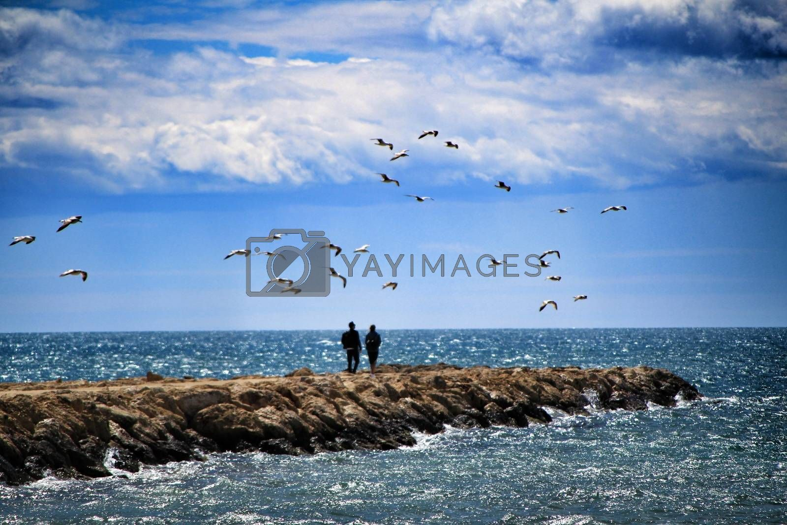 Walking day surrounded by seagulls on a breakwater under the sun in Santa Pola, Spain
