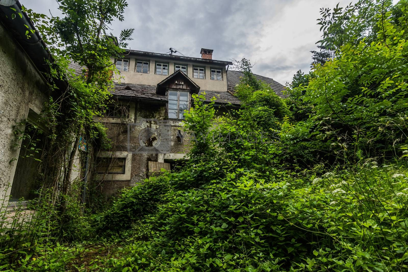 overgrown old abandoned house with tall shrubs in the countryside