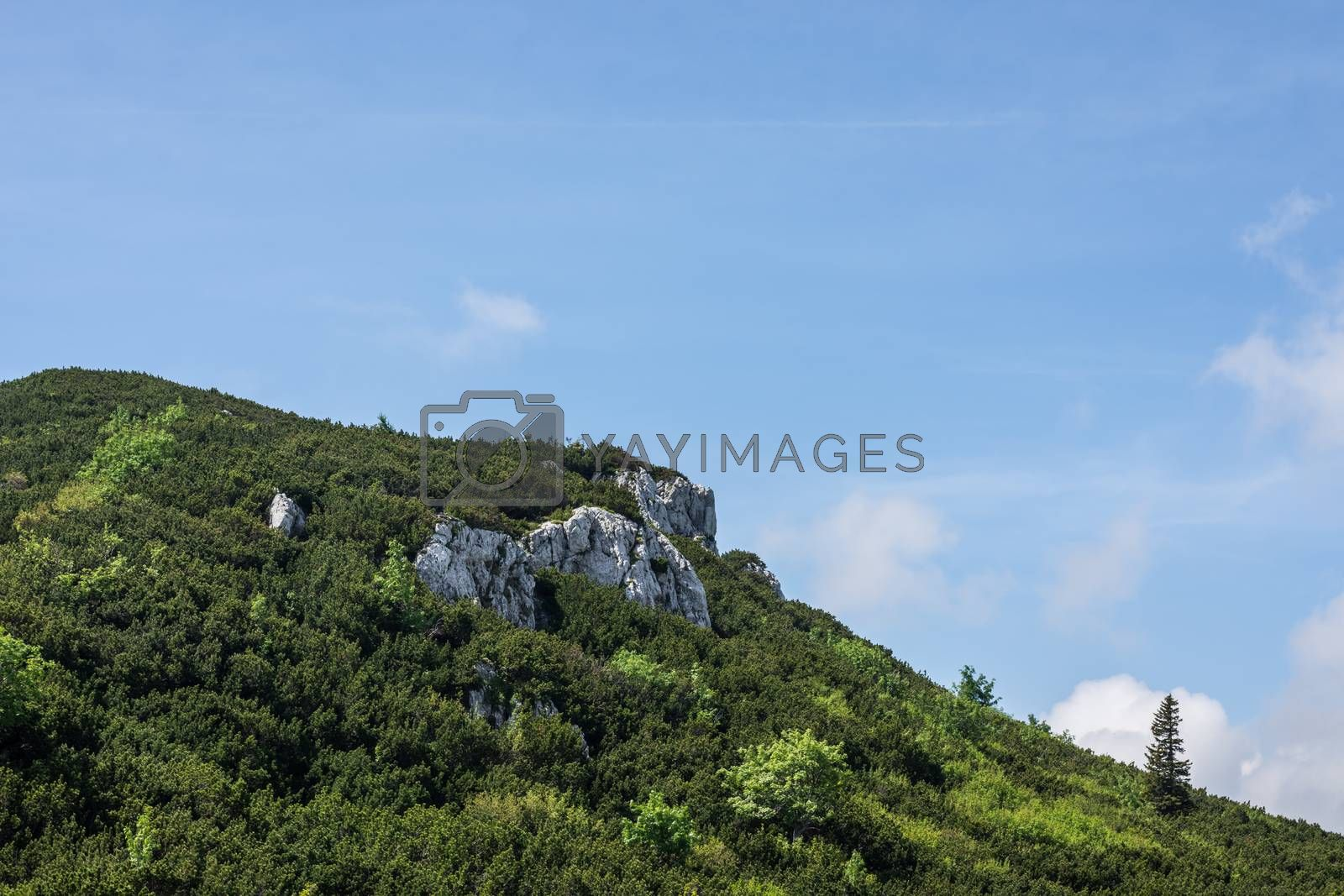 Rock with green plants in the mountains with blue sky