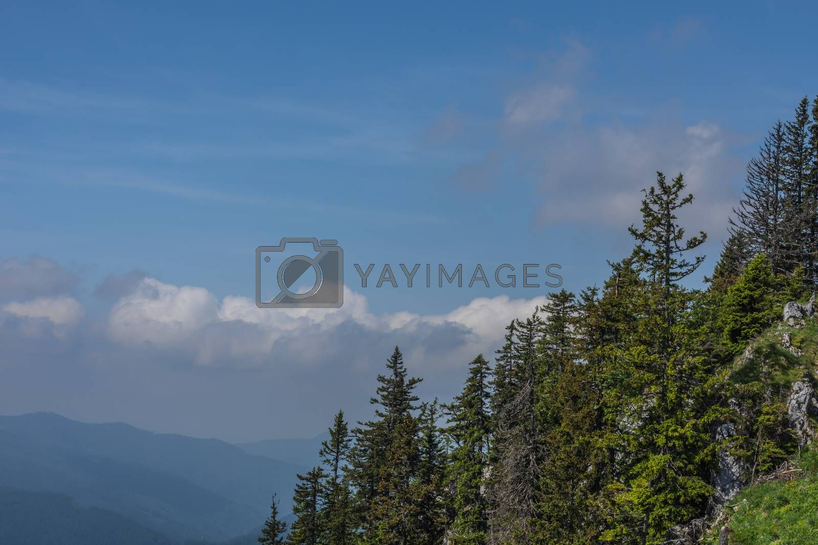 trees and rocks with blue sky while hiking