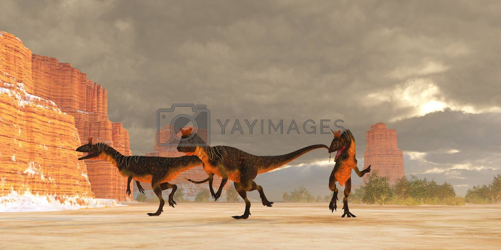 A pack of Cryolophosaurus theropod dinosaurs are on the desert trail of prey during the Jurassic Period.