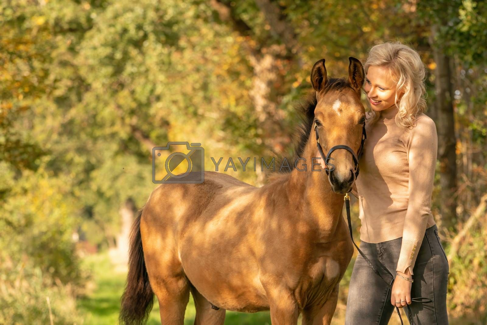 Portrait of a yellow, brown foal and a young woman in casual cloths. Autumn trees in background , golden sunlight.