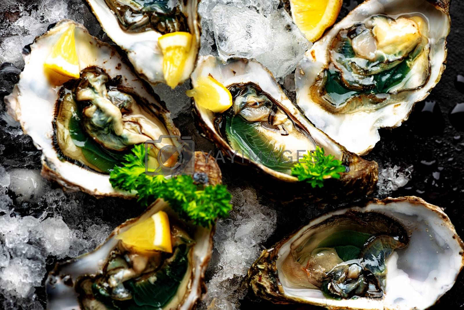 Raw opened oysters on crushed ice with lemon and parsley