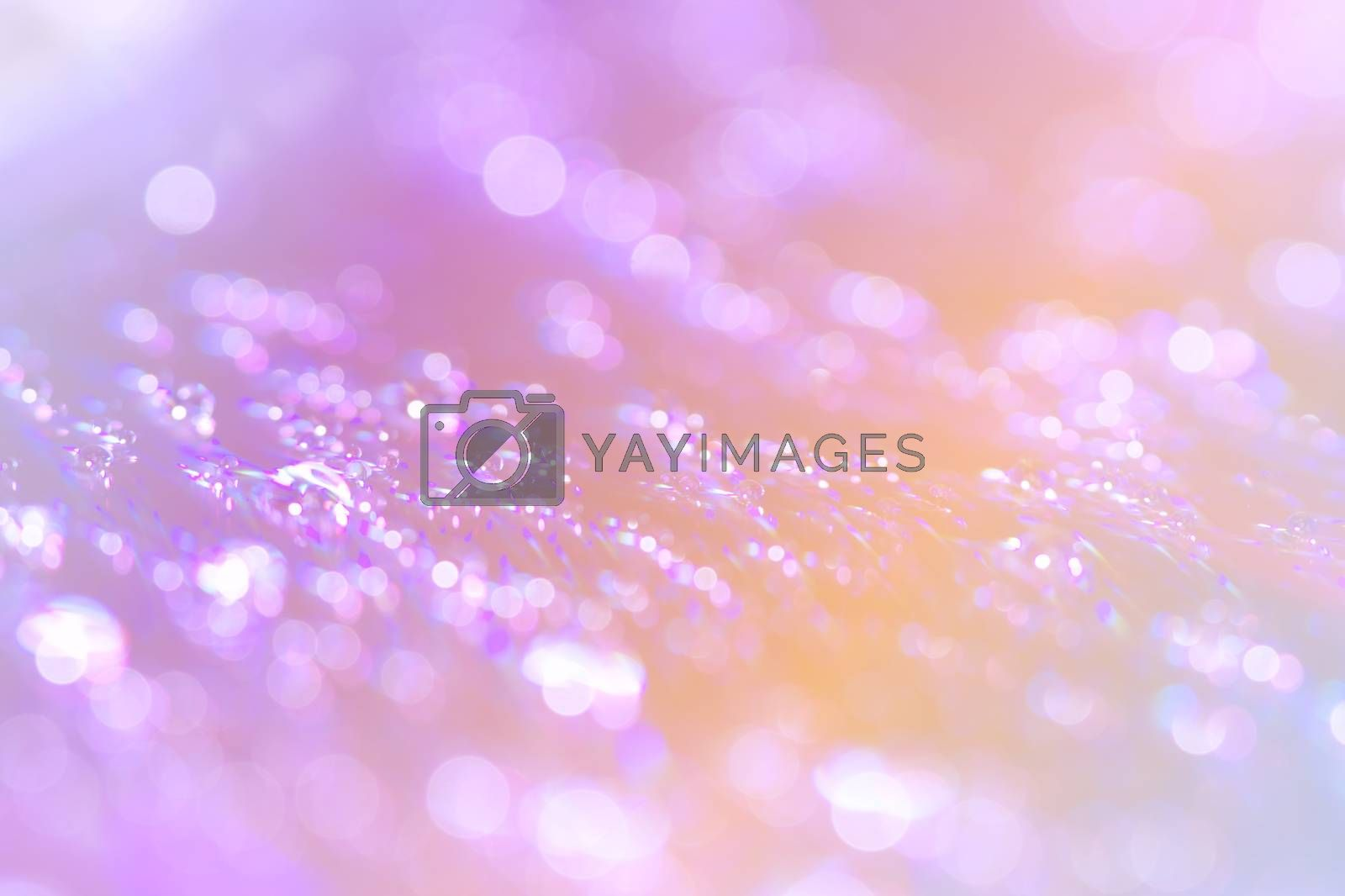 Abstract water drop bokeh on platter colorful fresh beautiful use as celebration festival concept background image.