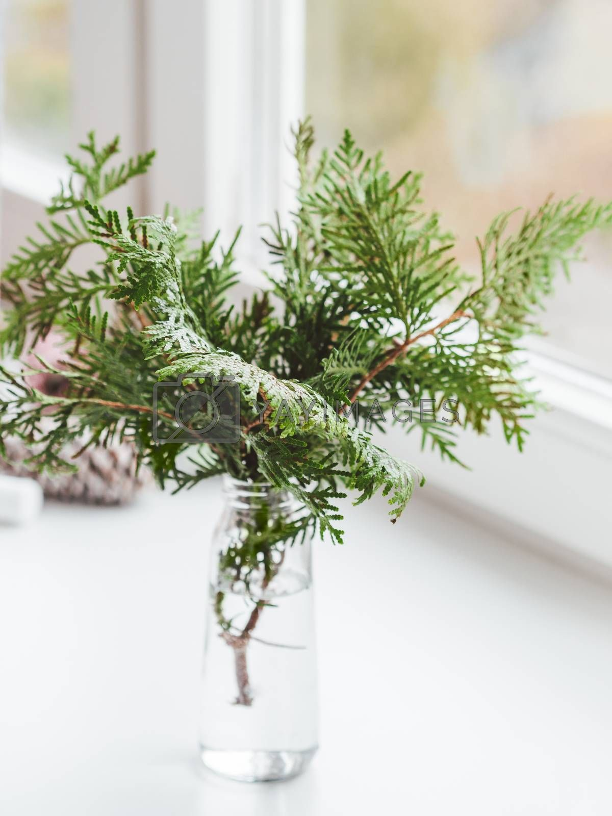 Vase with thuja branches stands on window sill. Sustainable alternative for Christmas tree. Caring for nature. Refusal to cut down spruce forests. New Year celebration.