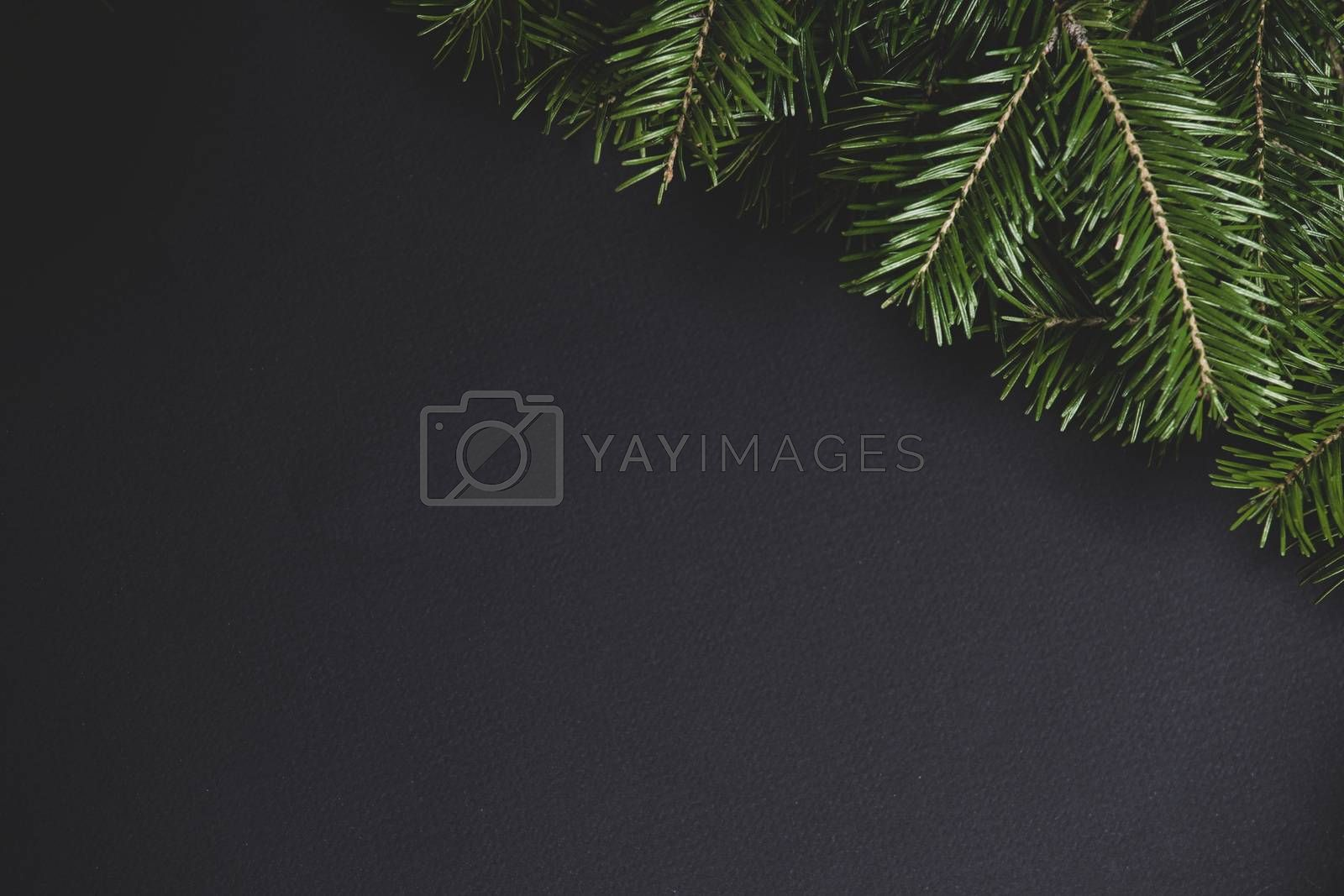 Christmas fir tree branch border fame on black paper stylish background with copy space for text