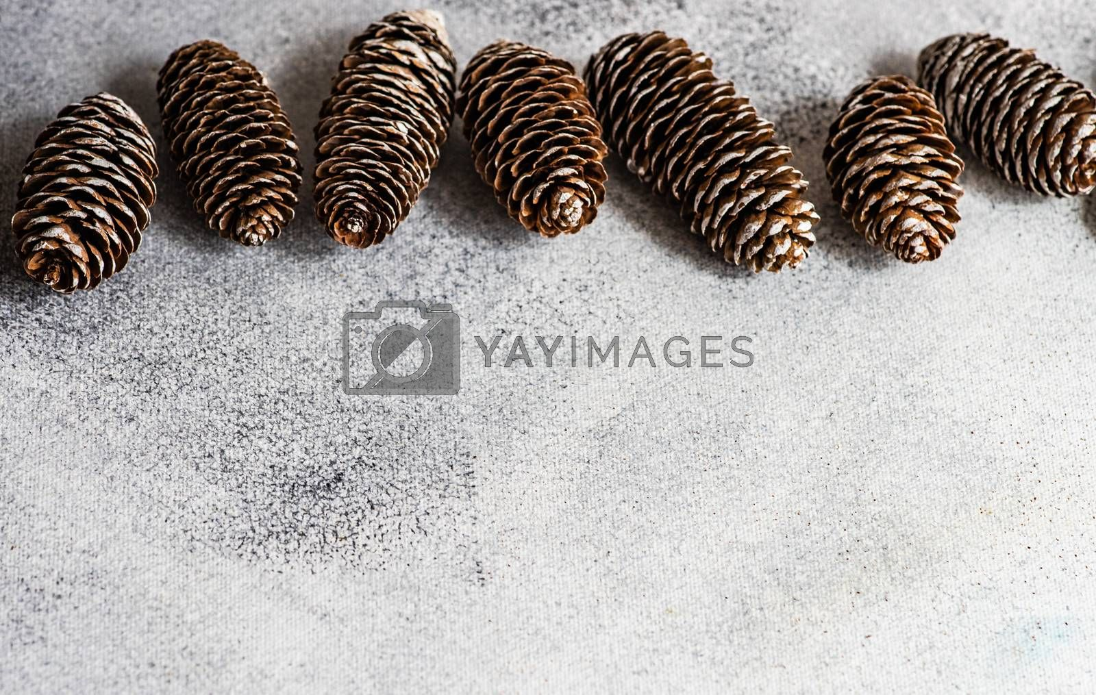 Pine cones in a frame on white concrete background with copy space