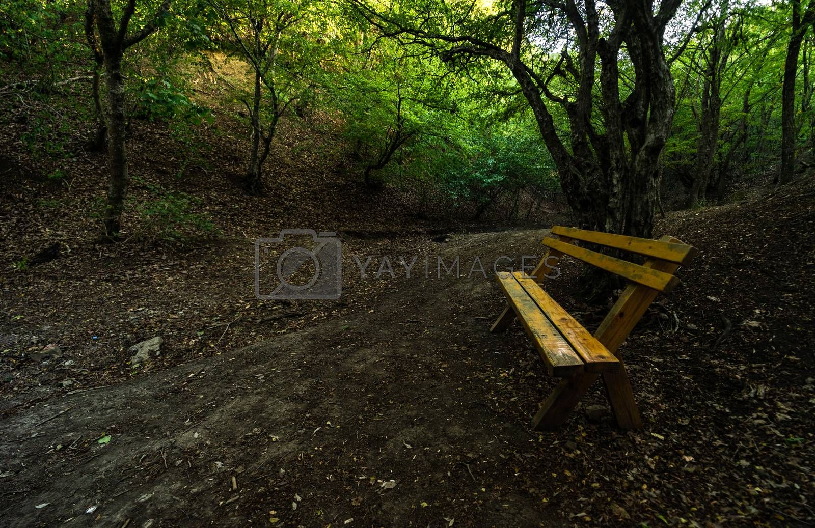 Hiking trail on route from Turtle lake to Mtatsminda is one of the most famous healthy hike trails in Tbilisi, Georgia