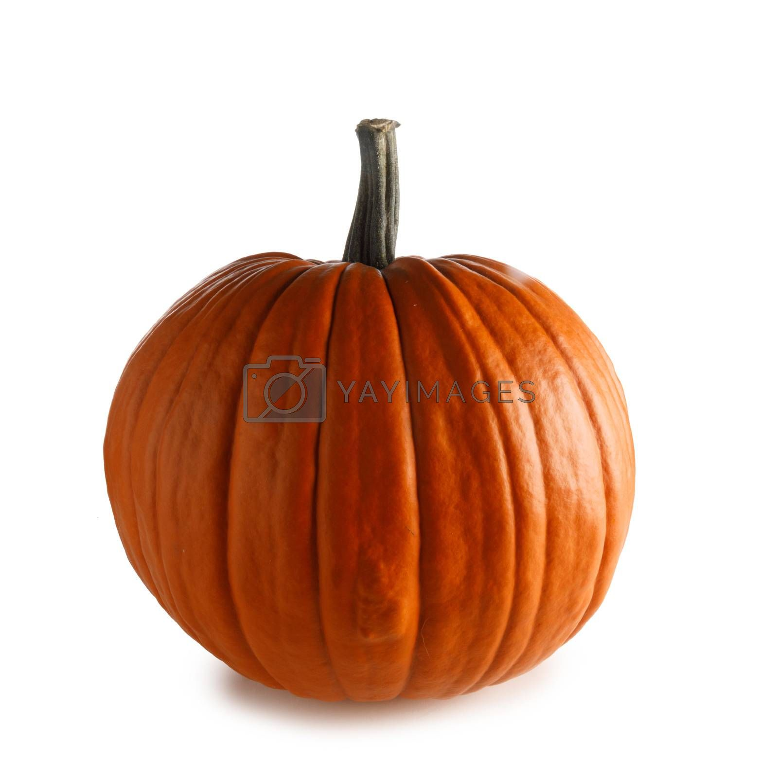 One perfect orange pumpkin closeup isolated on white background