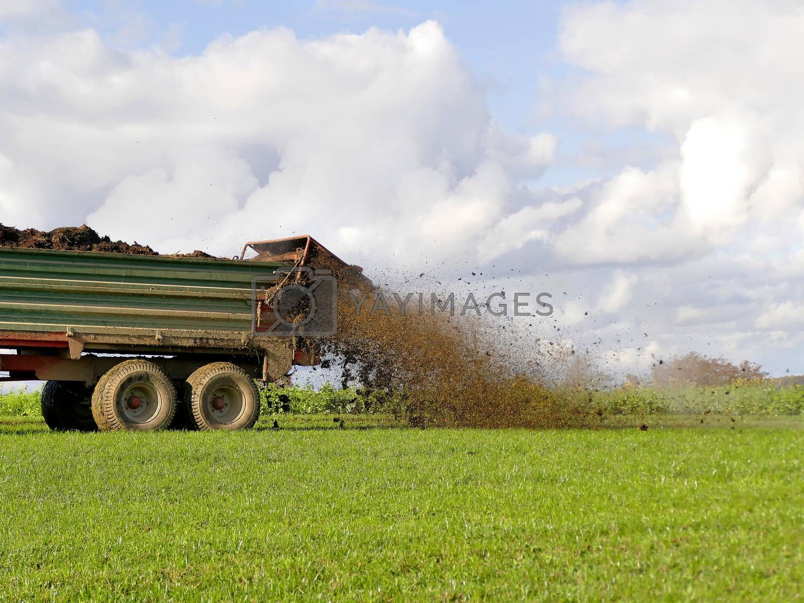 tractor throwing cow manure on a meadow in autumn in Germany