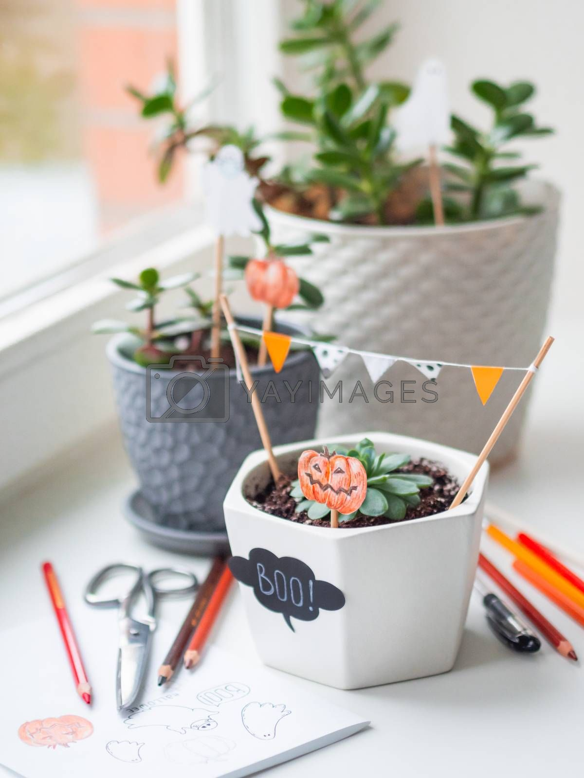 Hand drawn Halloween decorations in flower pots with crassula succulent plants. Ghost and pumpkins in flower pot. Cozy home.