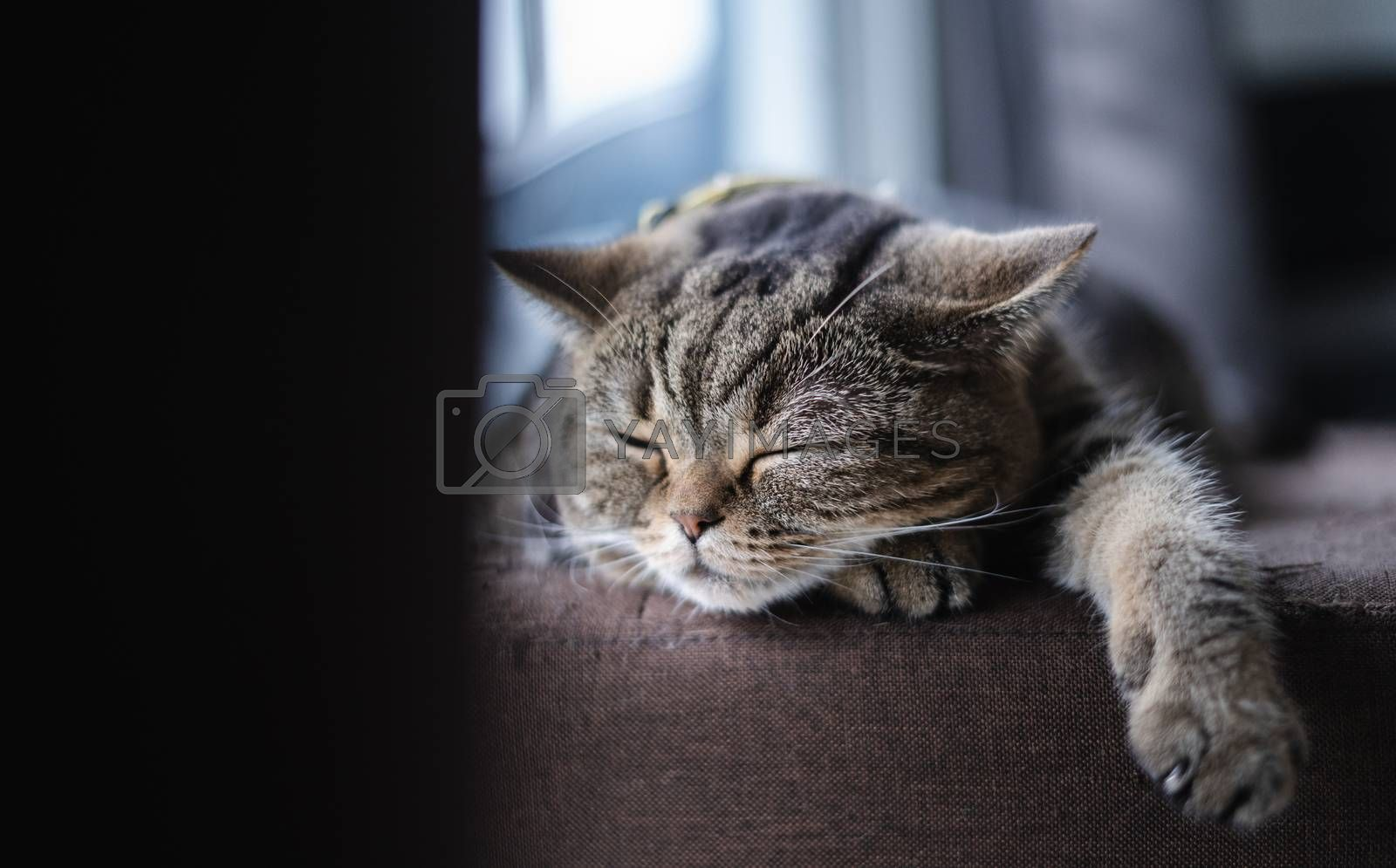 cat Cute little Cat sleeping on  sofa at my home cat perfect dream