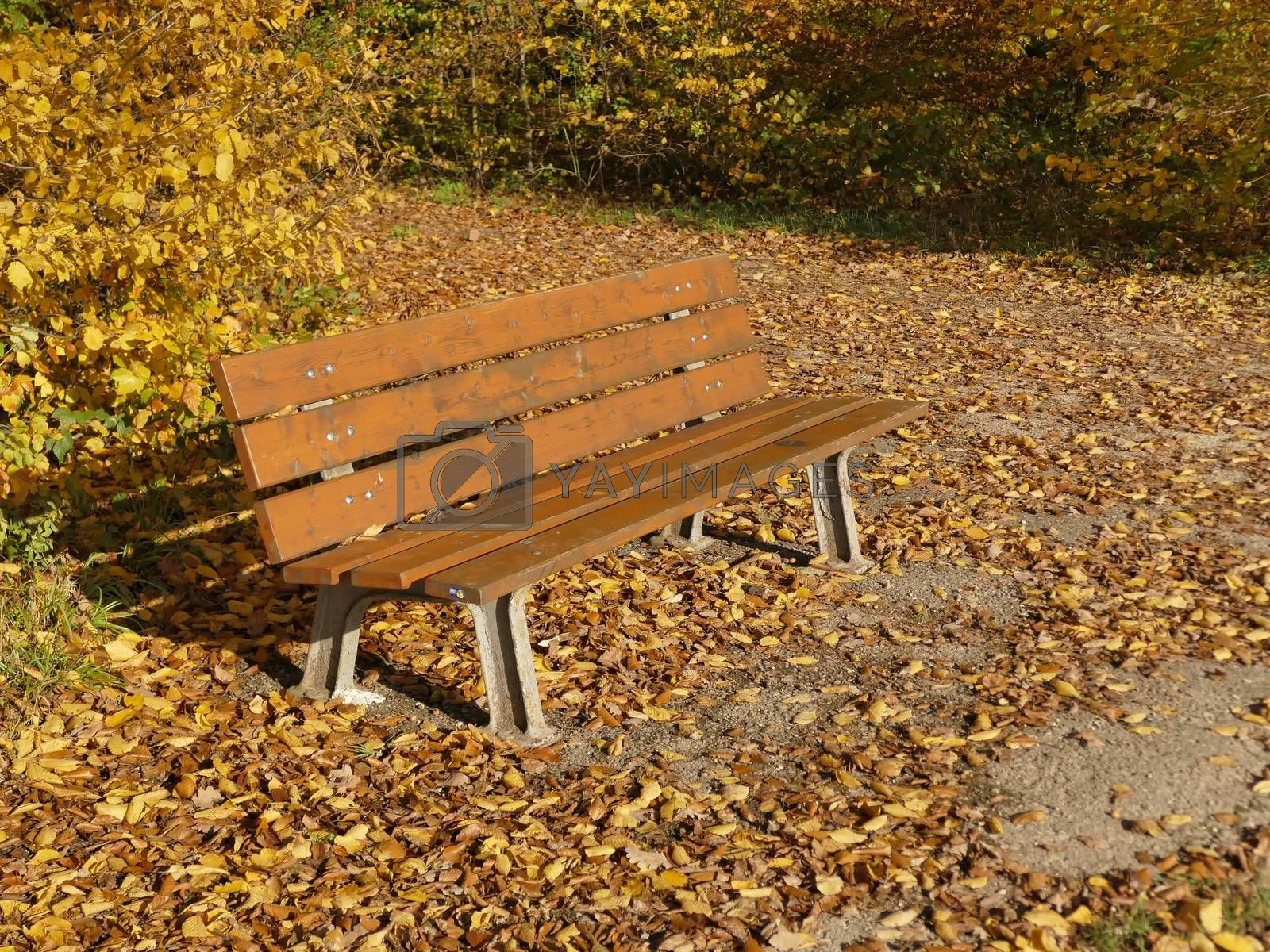 park bench in autumnal sun with fallen leaves