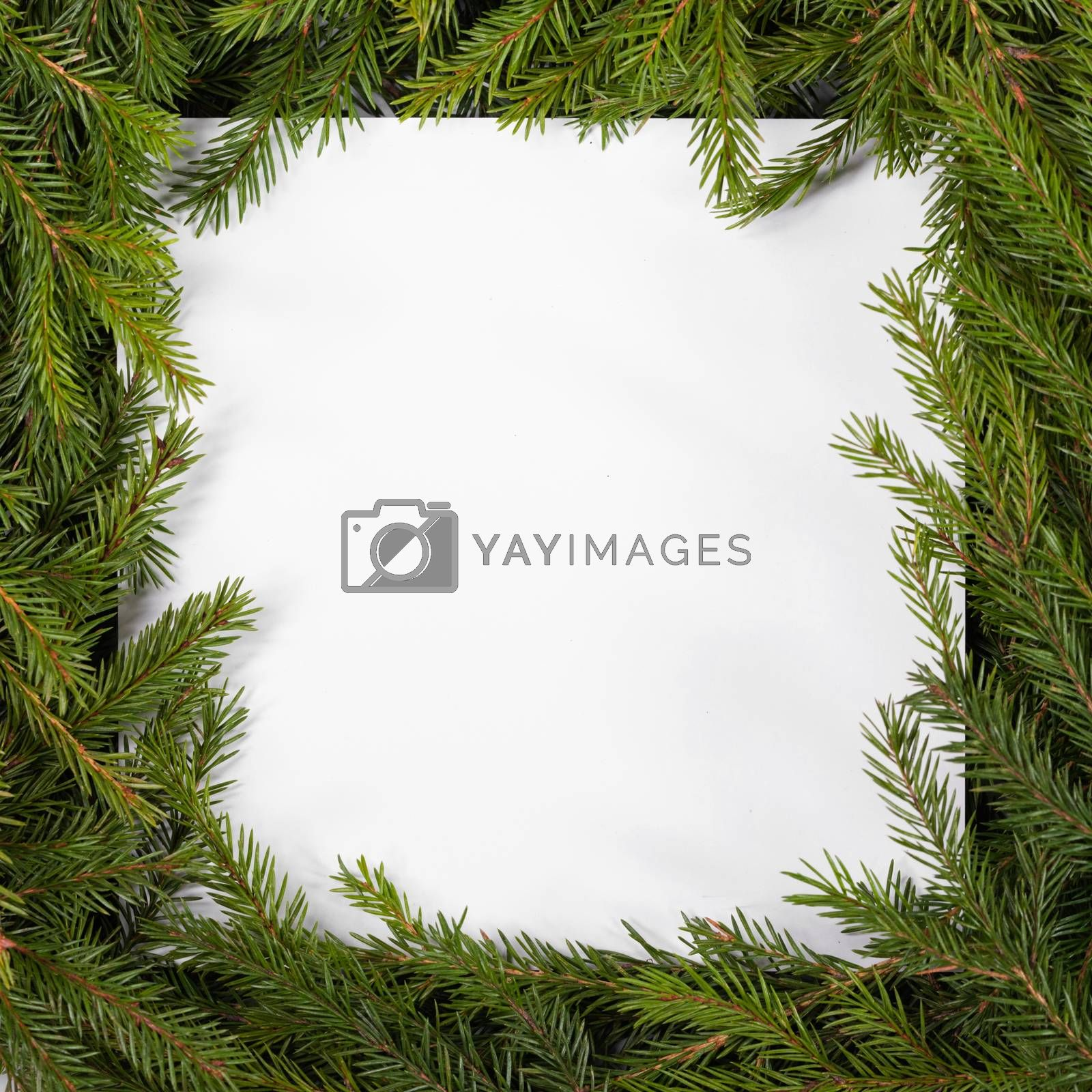 Natural fir Christmas tree square border frame isolated on white , copy space for text