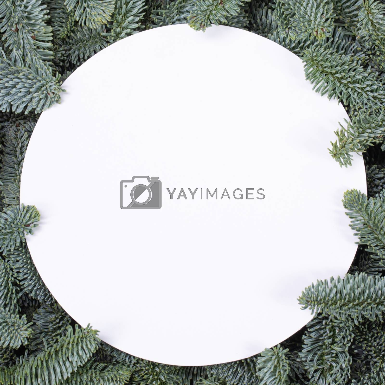 Natural fir Christmas tree round border frame isolated on white , copy space for text