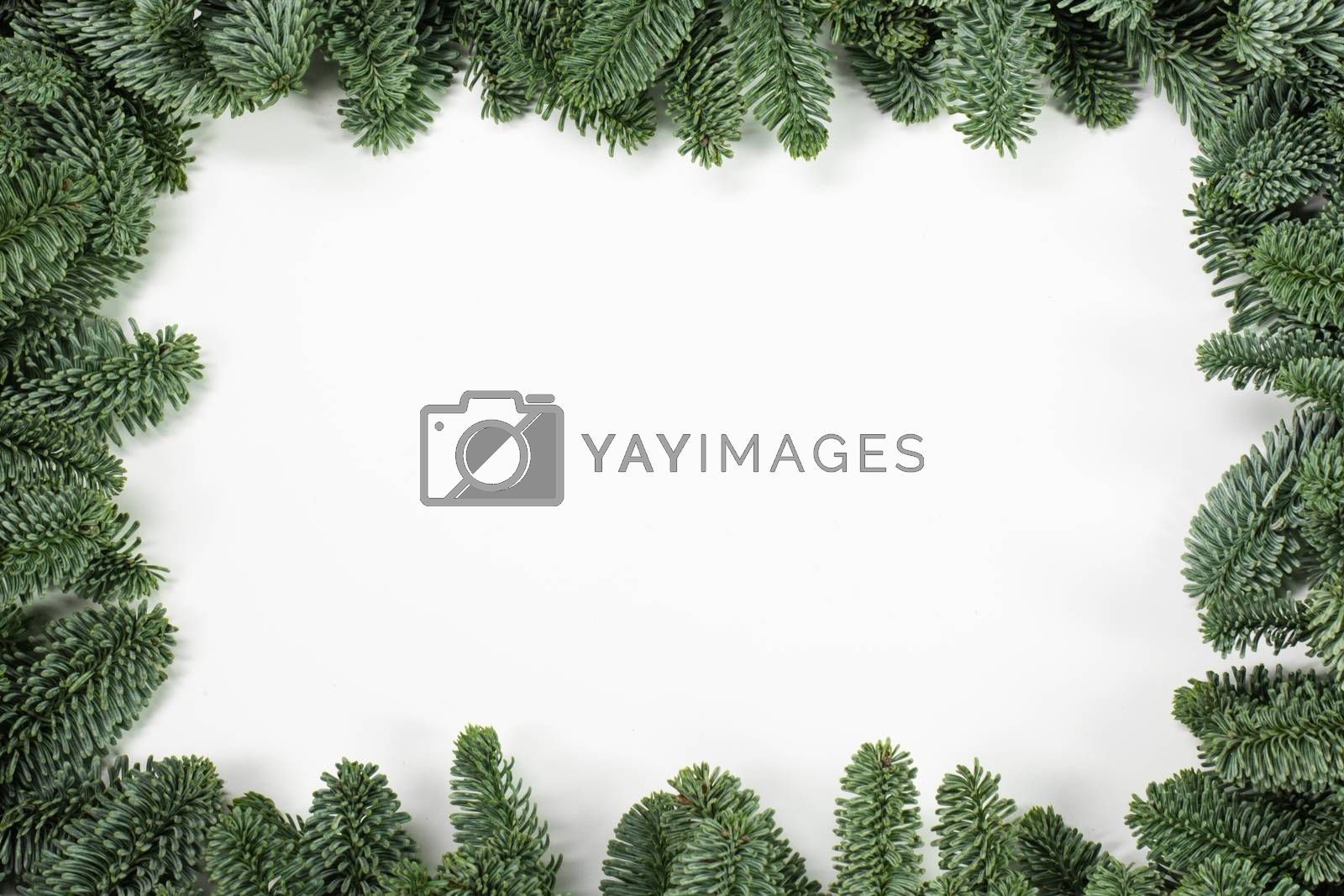 Natural noble fir Christmas tree border frame isolated on white , copy space for text
