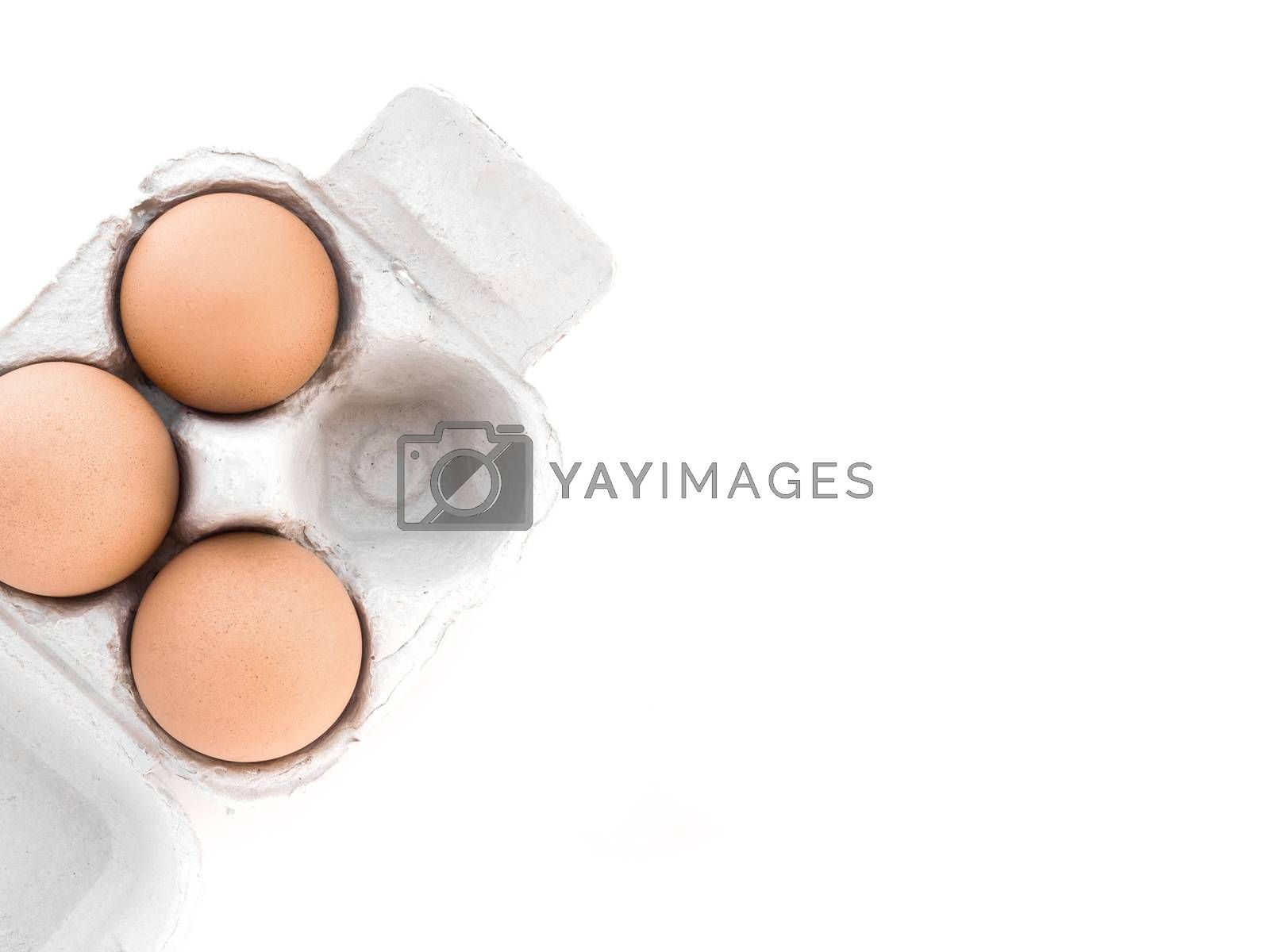 Disposable four pack egg tray. Organic Egg Pack. Isolated with copy space.