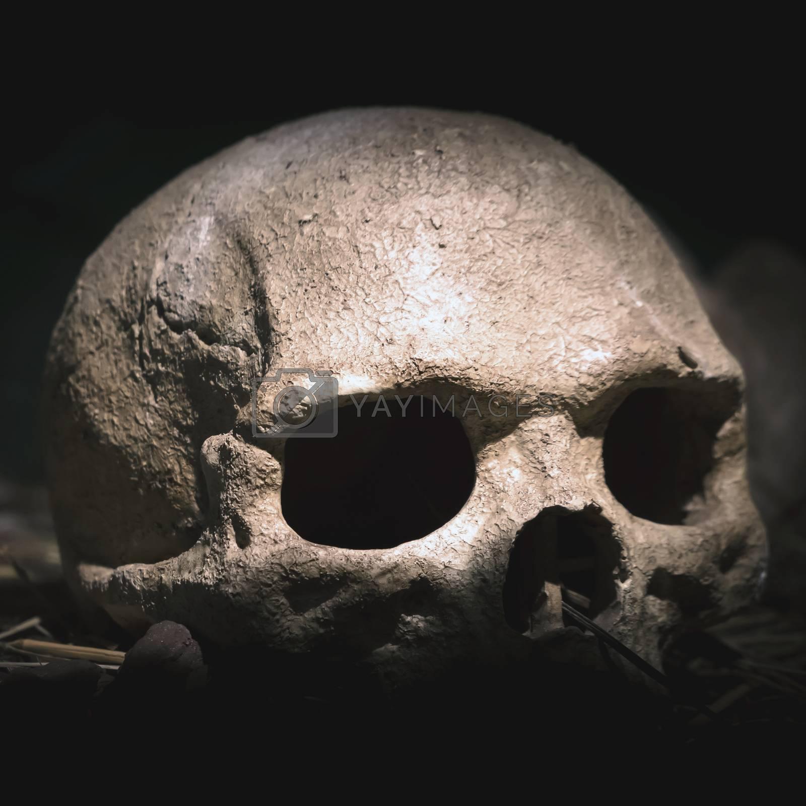 Old skull. Real human skull on dark background. Vintage black background.