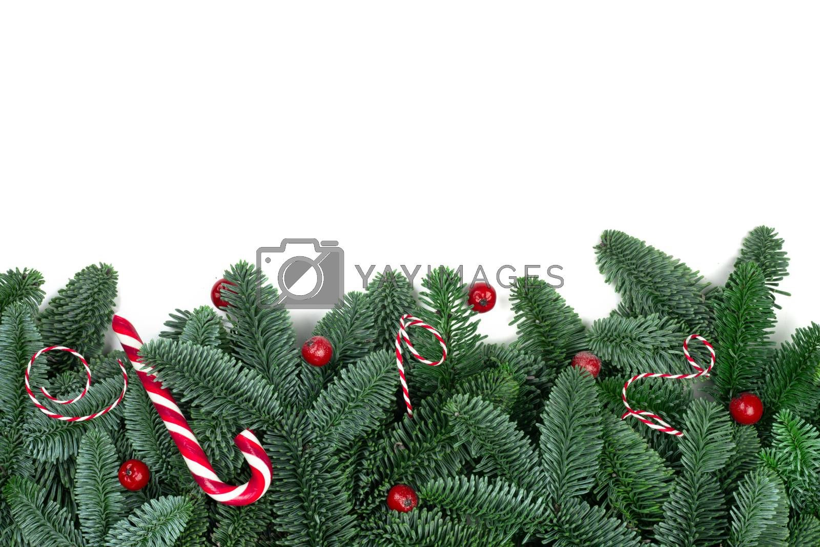 Christmas design boder frame greeting card of noble fir tree branches candy cane and berries isolated on white background