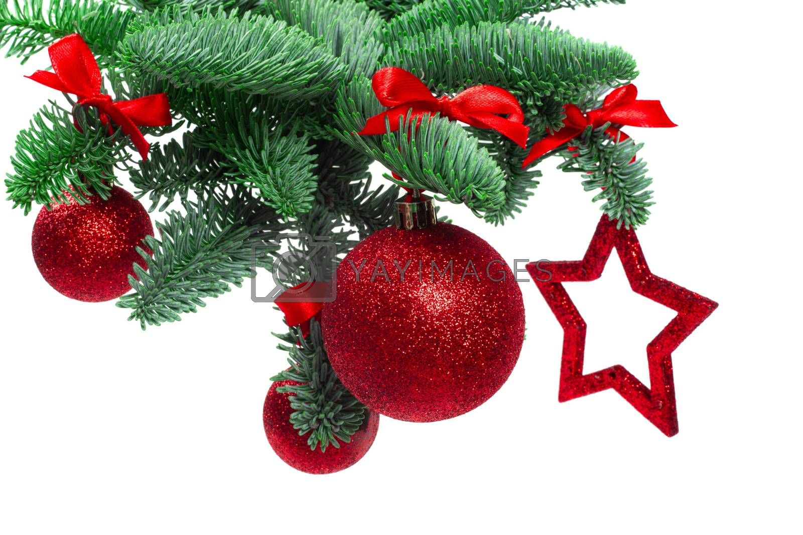 Christmas evergreen spruce noble fir tree and red glitter glass bauble balls and star isolated on white background