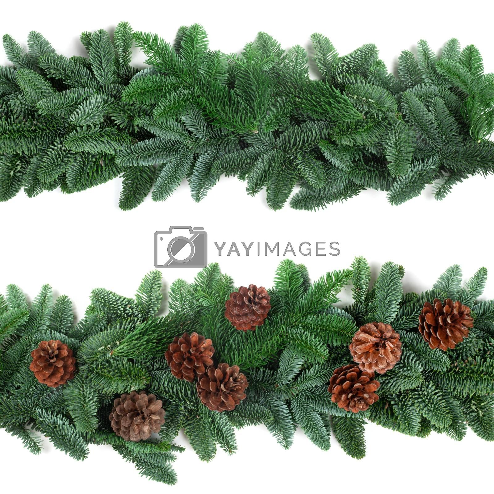 Christmas Border frame of natural noble fir tree branches and cones isolated on white background