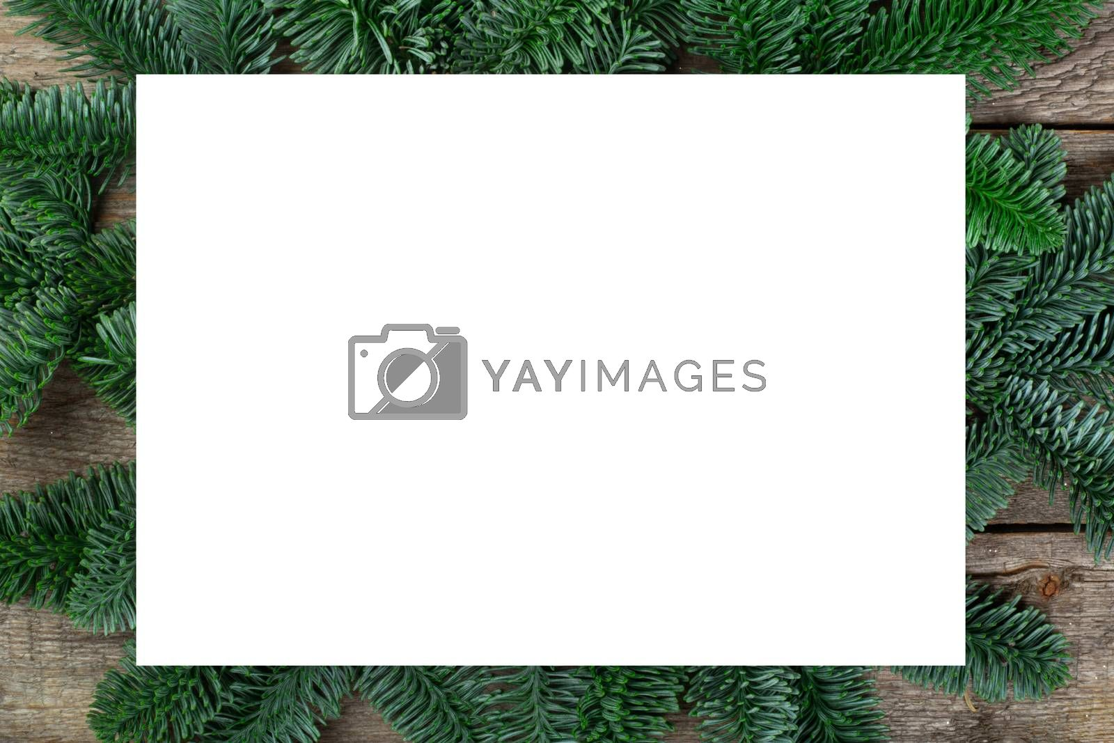 Christmas frame of natural fir tree branches with copy space for text isolated on white