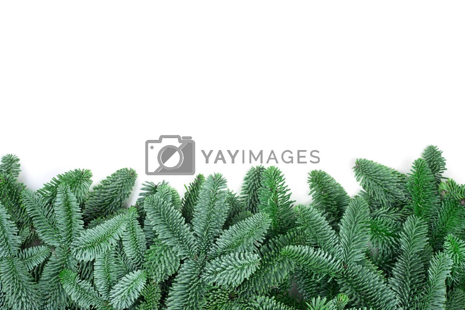Traditional green christmas tree noble fir border frame isolated on white background copy space for text