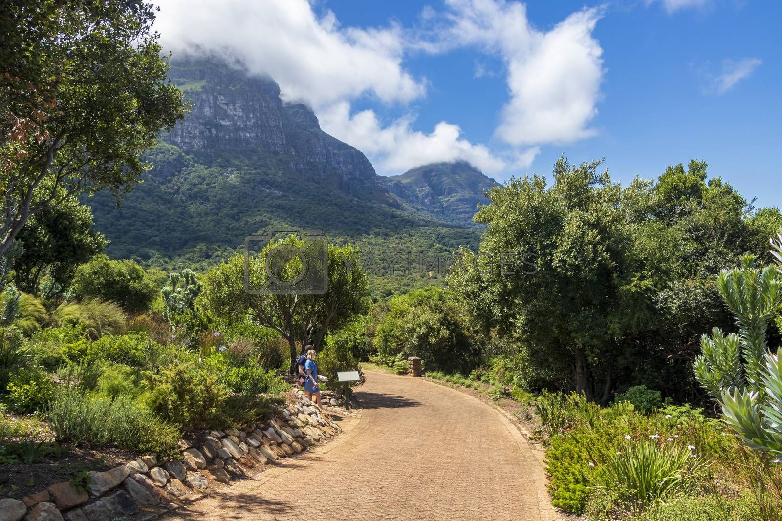 Mountains and trails Kirstenbosch National Botanical Garden, Cape Town, South Africa.