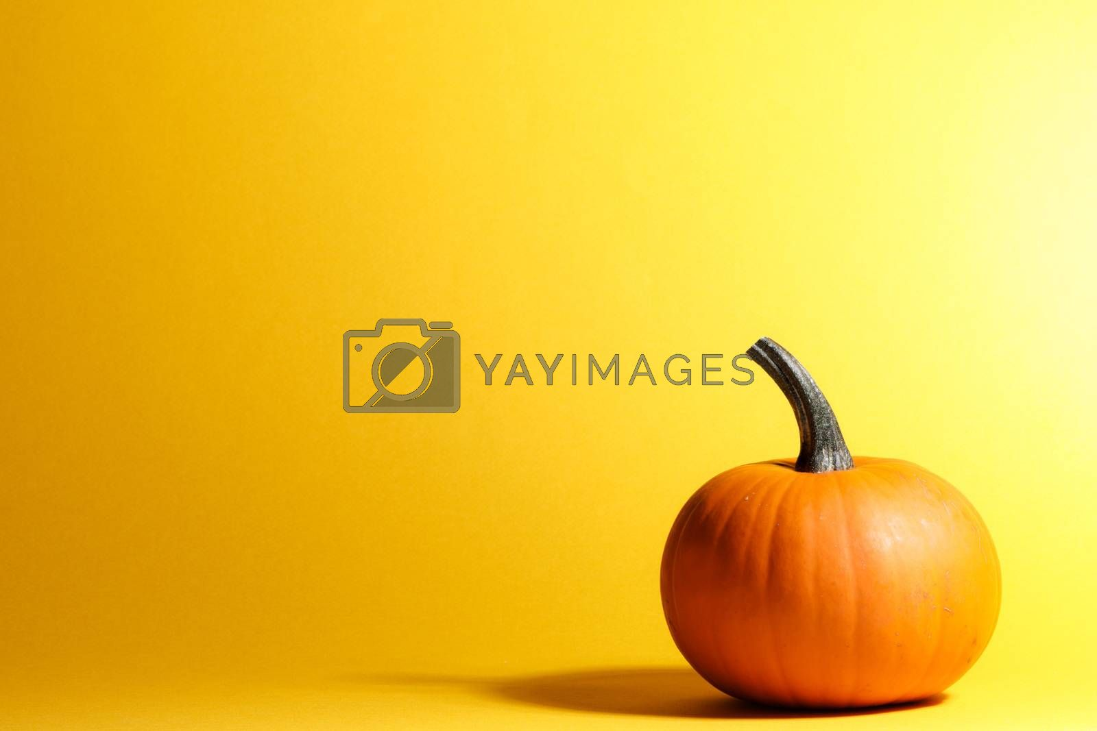 Holiday halloween background with pumpkin on yellow, copy space for text