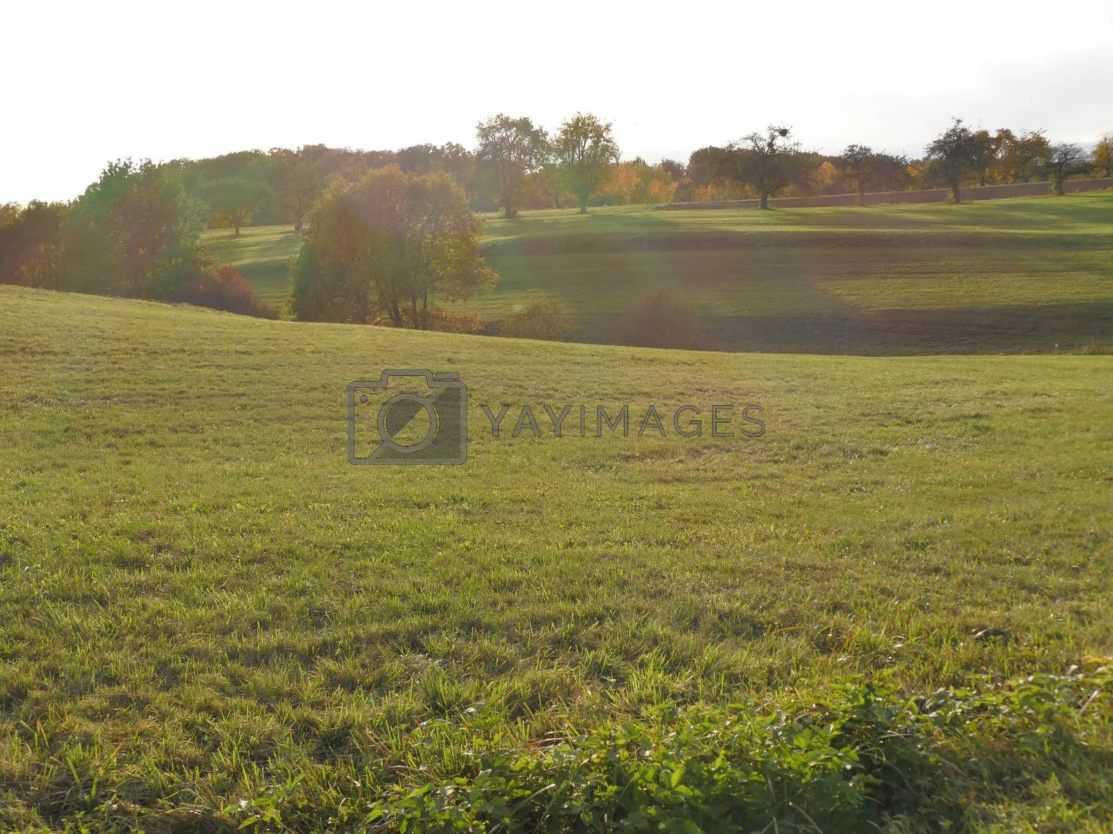 green meadow with trees in soft autumnal lighting
