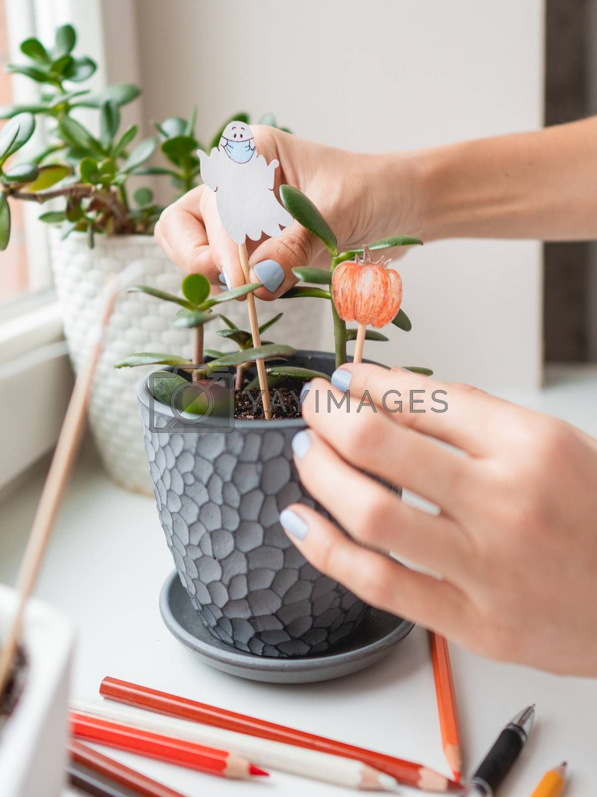 Woman decorates flower pots with handmade decorations for Halloween. Painted ghost in medical protective mask and pumpkin in flower pot with succulent plant.