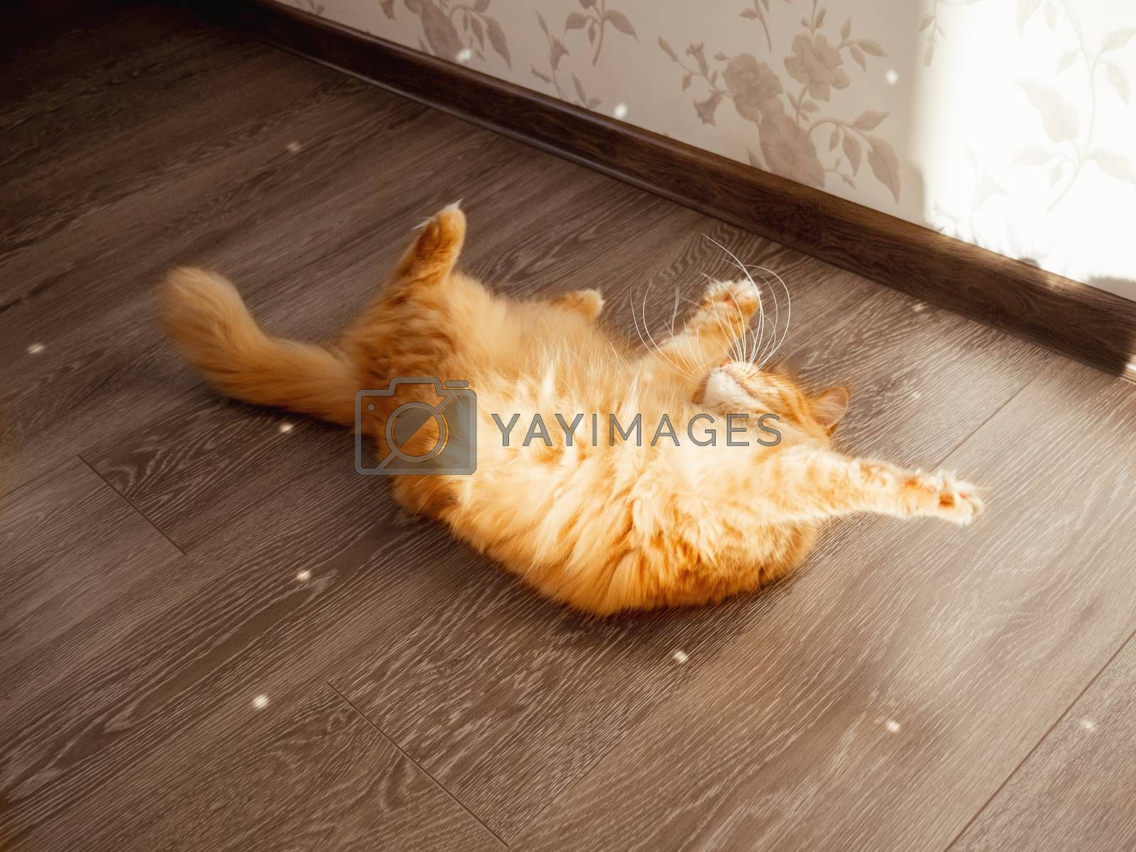 Cute ginger cat plays with sun reflections from sparkling mirror disco ball. Fluffy pet and sunny morning in cosy home. Light and shadow.
