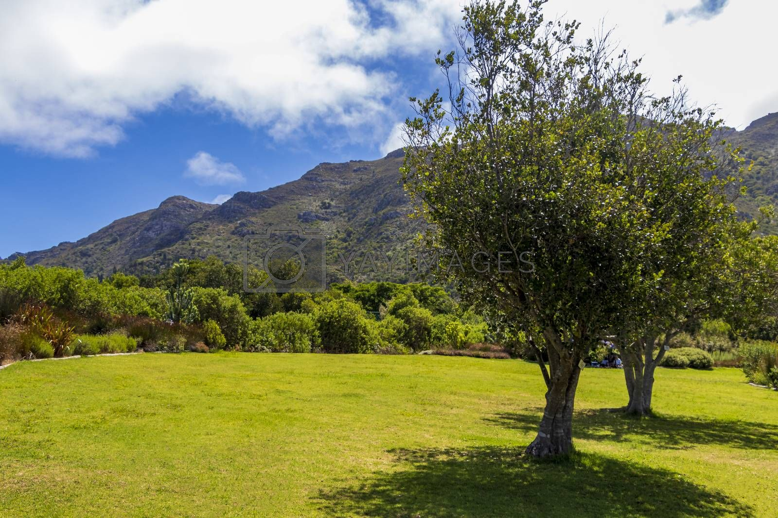 Landscape and Mountains in Kirstenbosch National Botanical Garden panorama, Cape Town, South Africa.