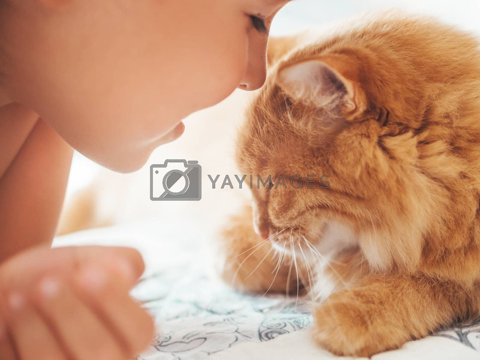 Cute ginger cat and child snuggle. Kid and fluffy pet. Faces of little boy and fuzzy domestic animal. Morning bedtime.