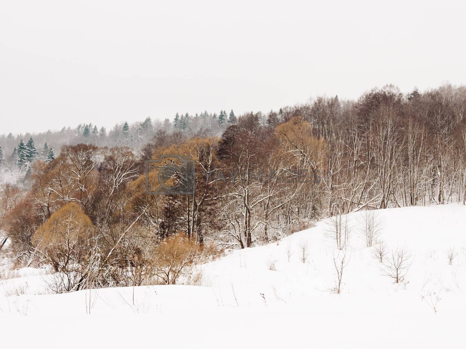 Winter natural background with trees under the snow. Rural landscape. Countryside.