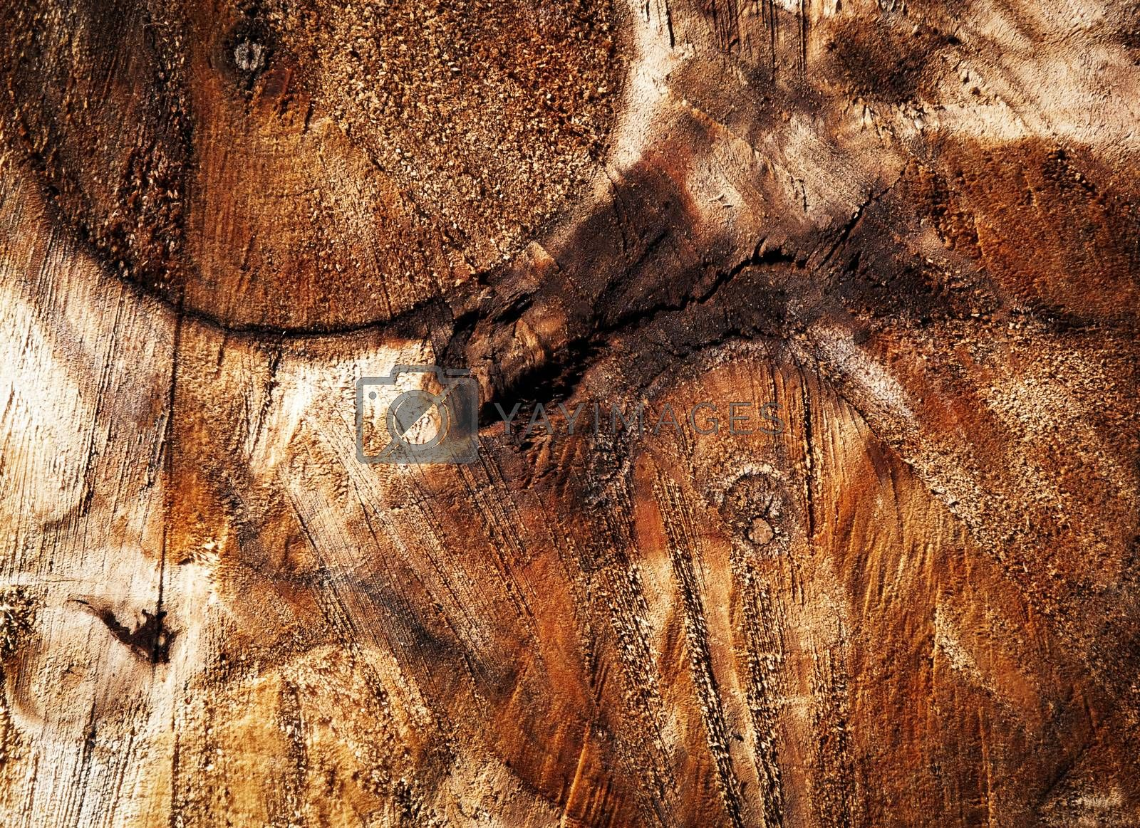 background or texture abstract detail on sawn tree trunks