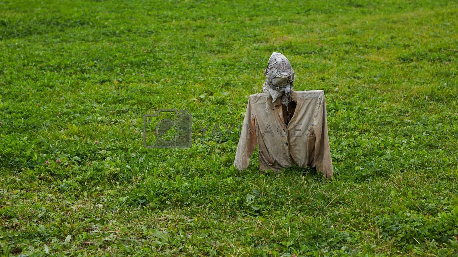 Scarecrow in field. Scarecrow on nature background.