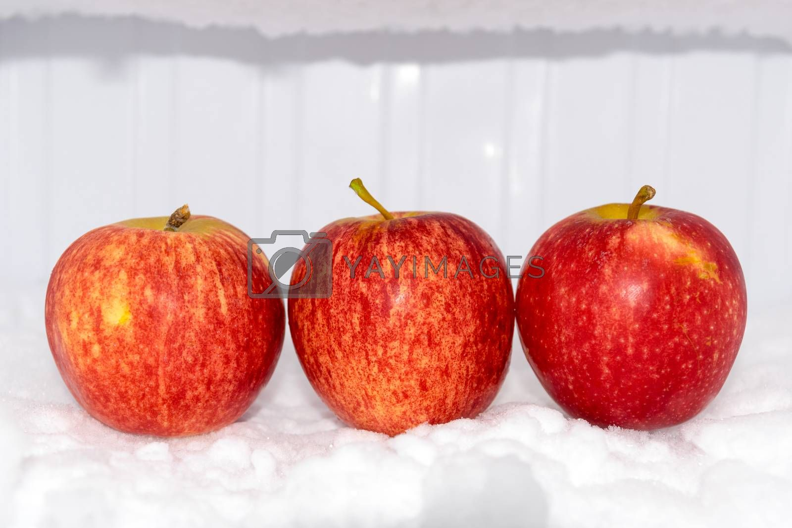 red apple with white background in the Freezer.