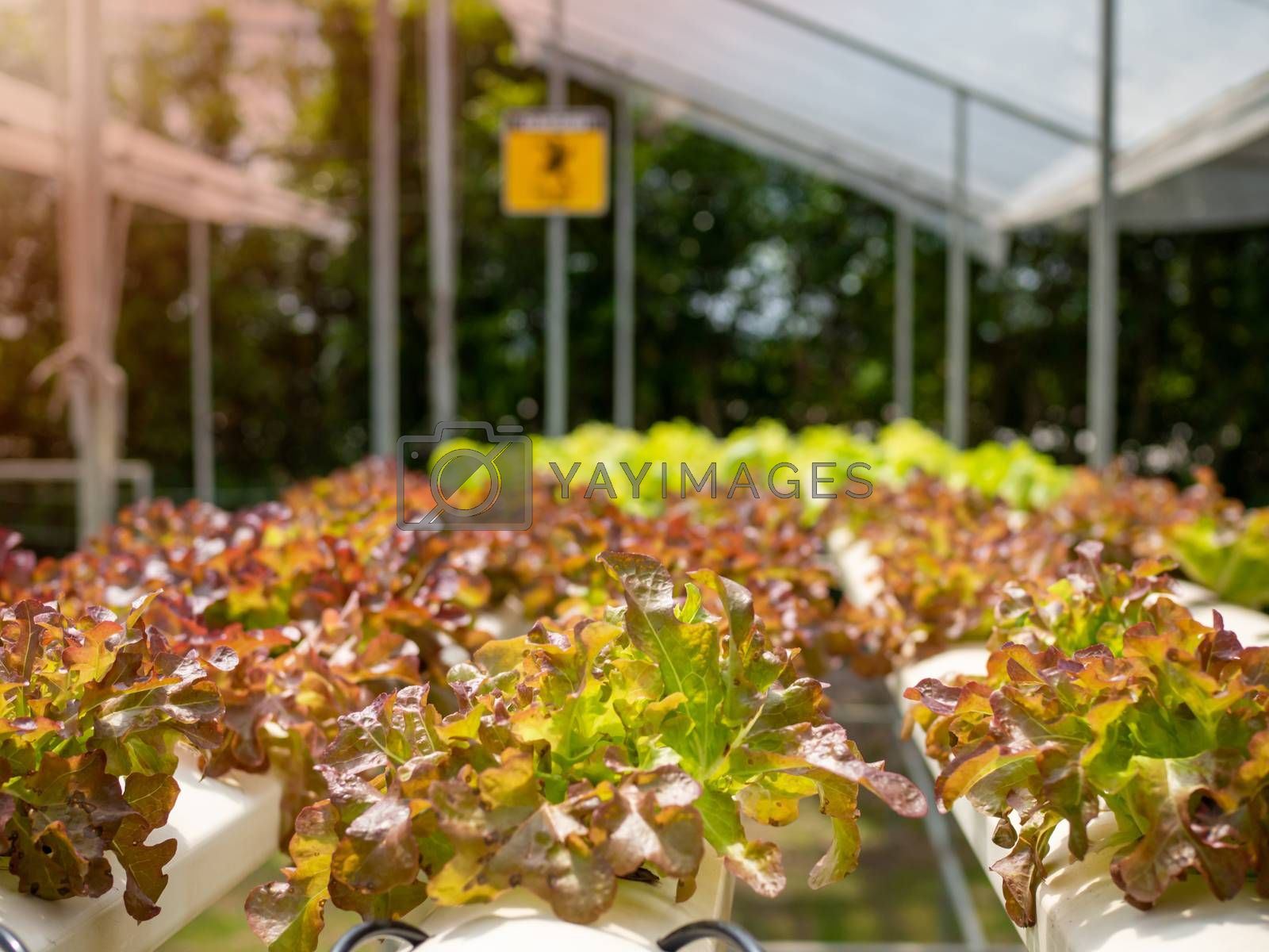 Organic vegetable plots For making healthy food