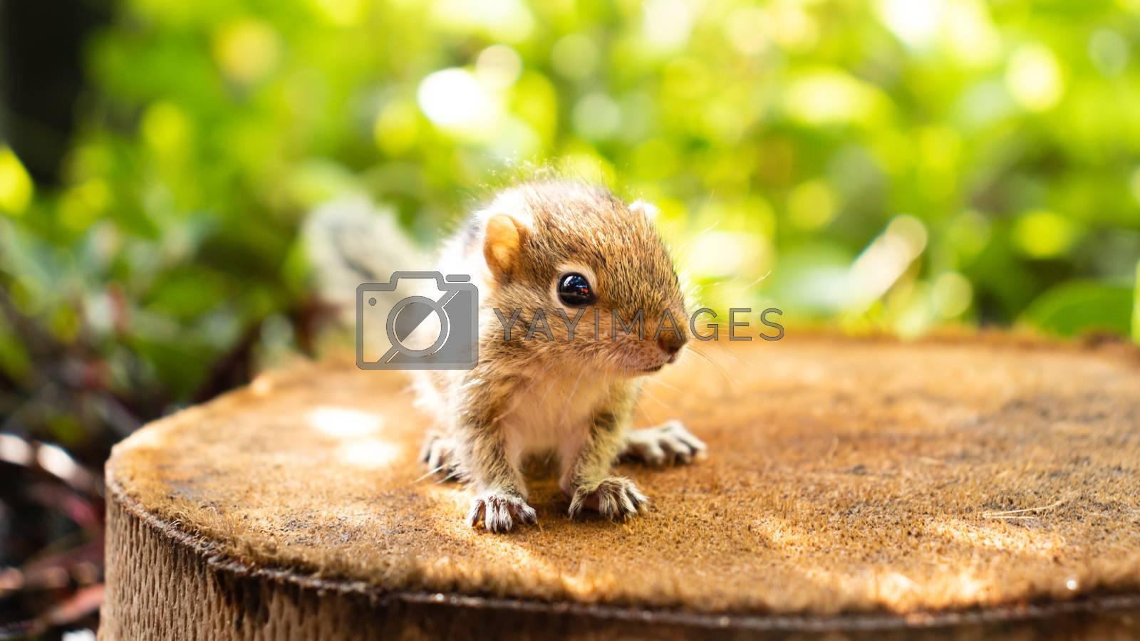 Cute abandoned Baby squirrel looking at camera