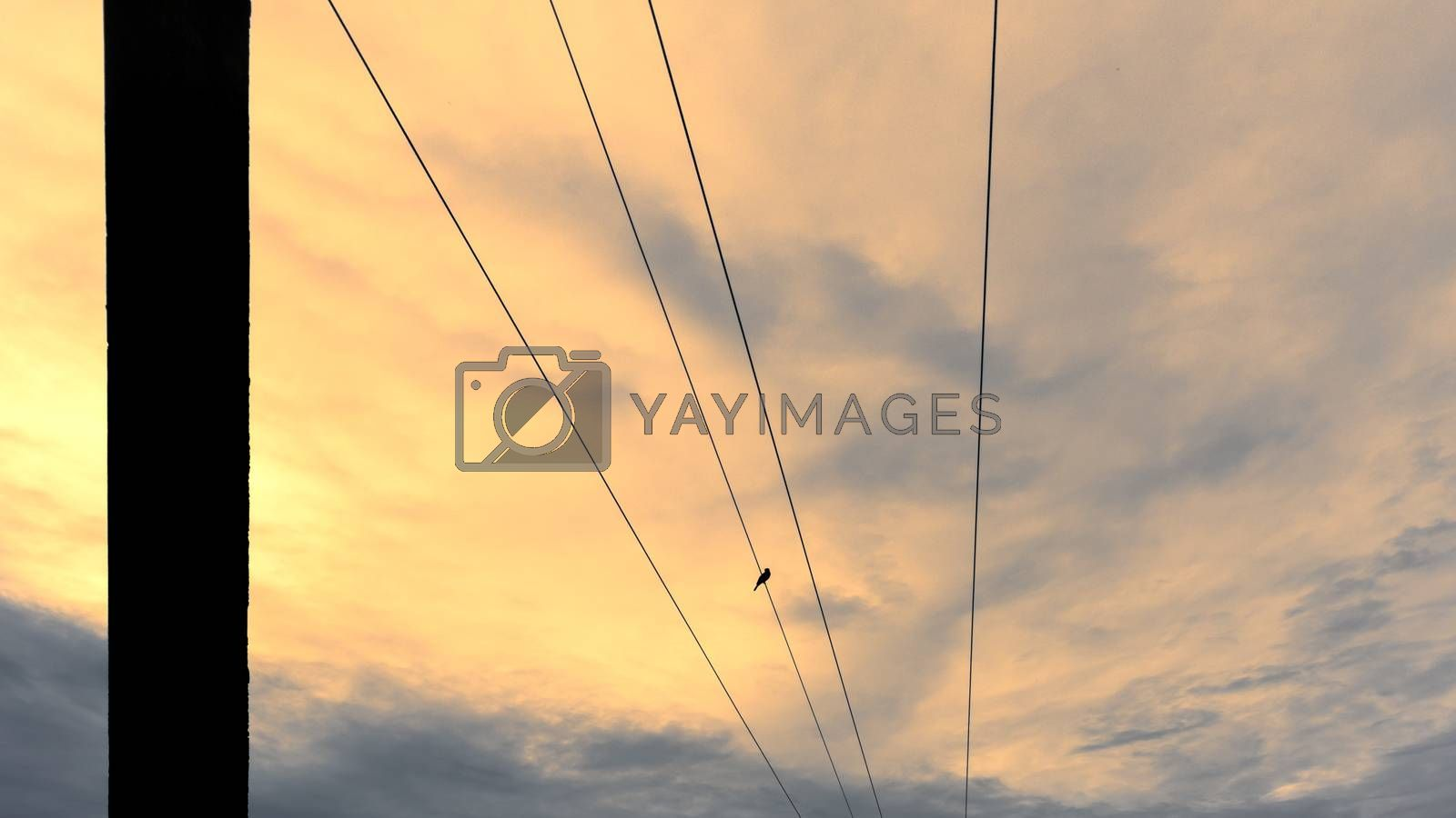 Parallel power lines meets in the horizon evening photograph