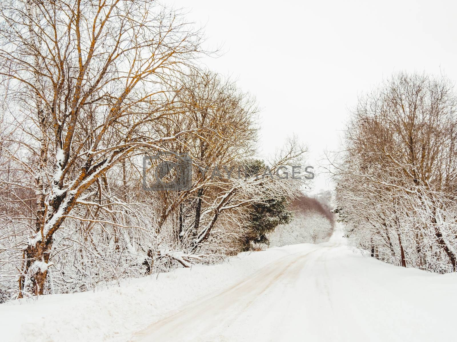Winter natural background with trees and country road under the snow. Rural landscape. Countryside.