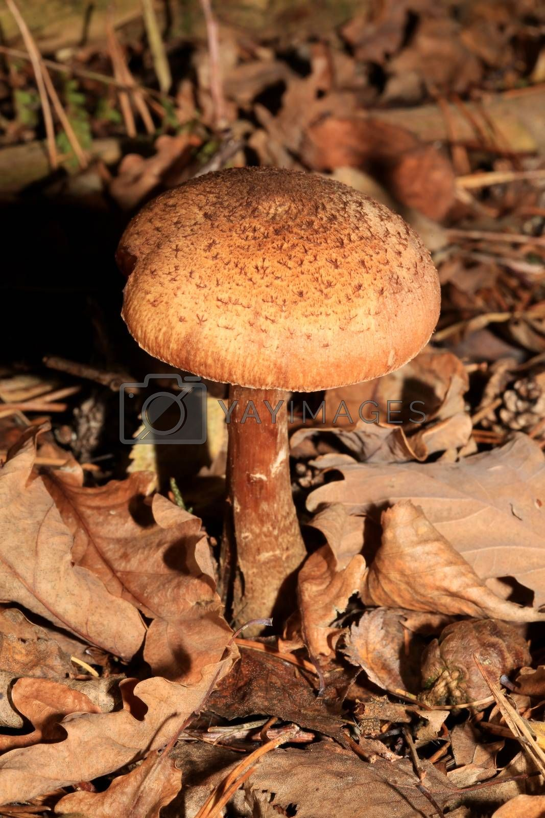 Wild winter mushrooms on forest macro background north germany high quality print
