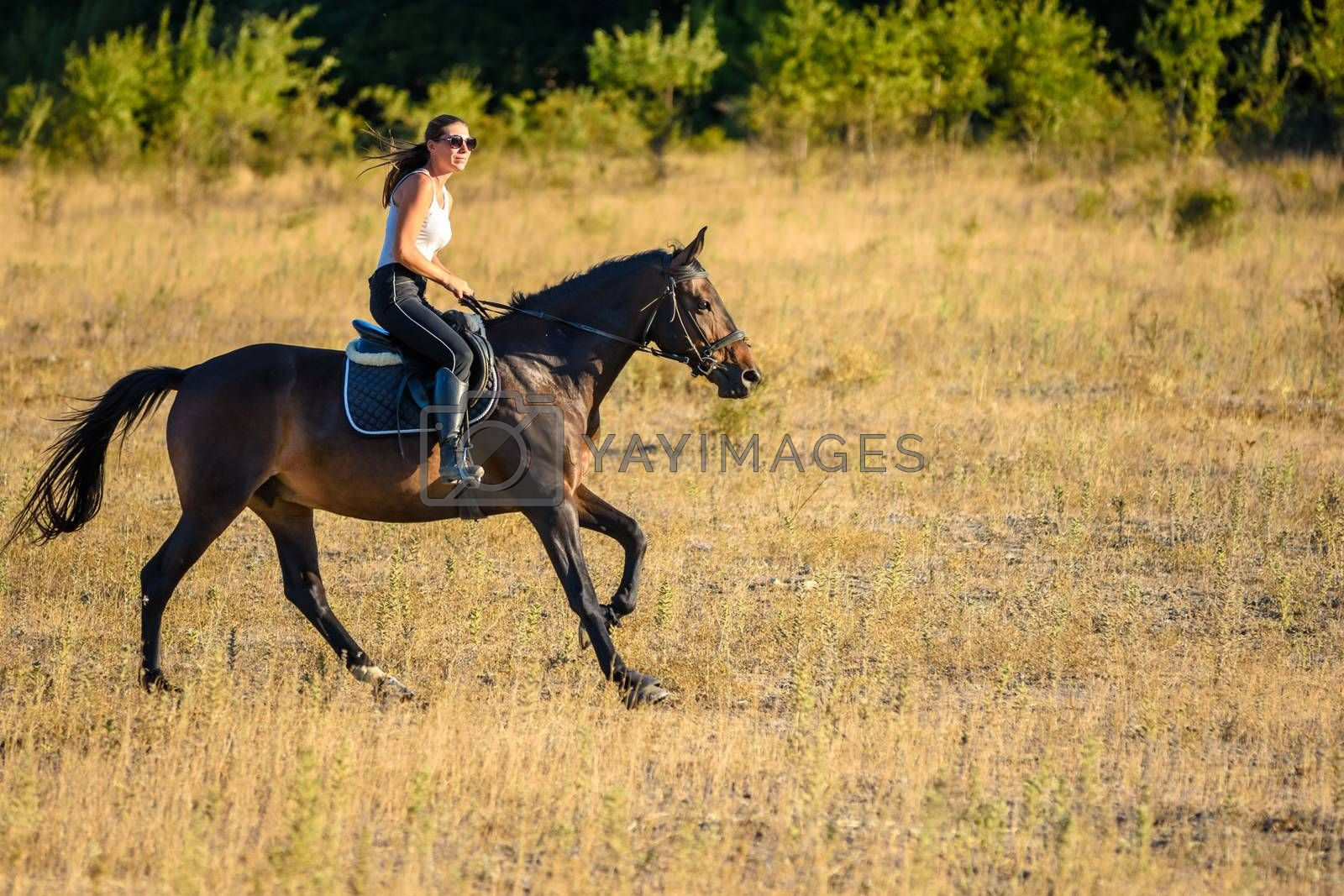 Girl rides a horse across the field on a sunny day
