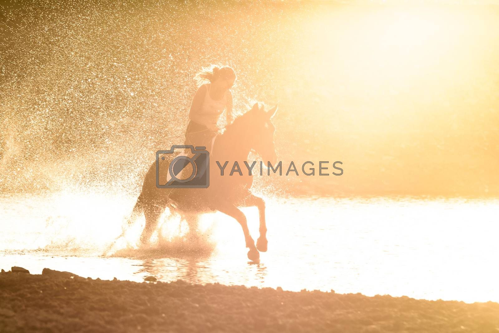 A girl rides a horse in the water along the river bank in the rays of sunset